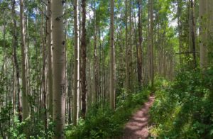 Trail Etiquette and Safety